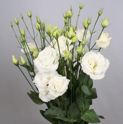 Доставка цветов лизиантус лучший подарок мужчине деве