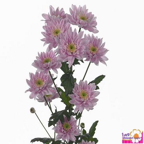 Мона лиза доставка цветов купить цветы с доставкой в курске