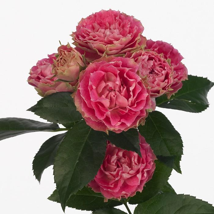 Очень дешевая доставка цветов