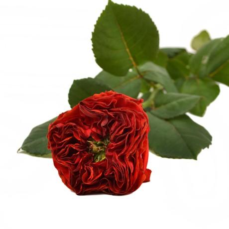 ай фото флеш роза