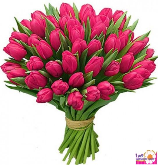 Малинового цвета цветы