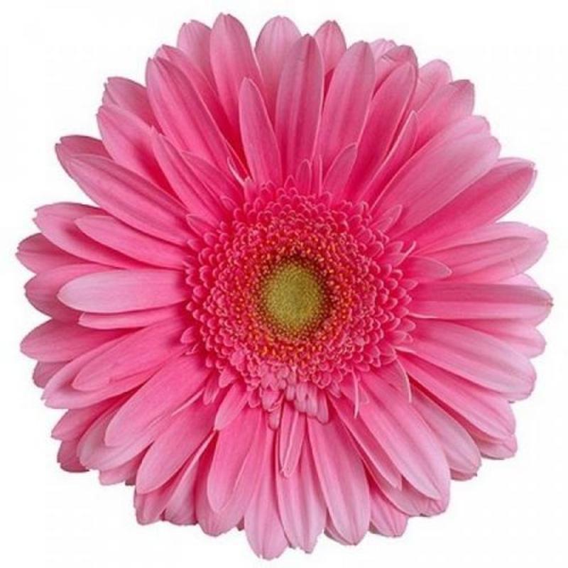 Доставка цветов в усмани