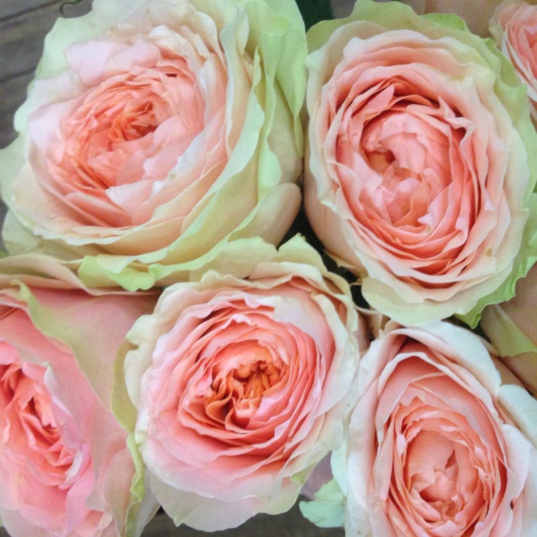 Купить цена пионовидные розы