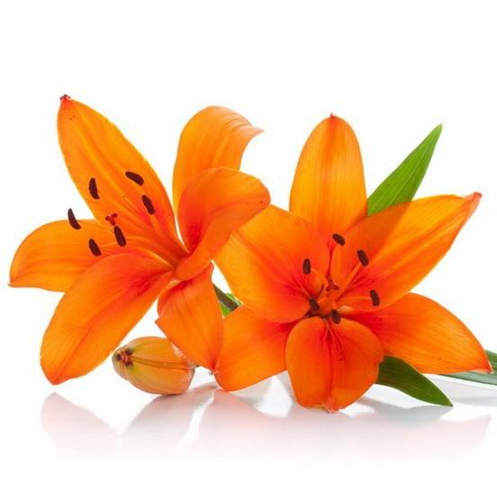 oranzhevie-lilii-buket-roza-tsena