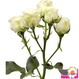 Кустовые розы купить в г.екатеринбурге какие цветы купить на выписку из роддома