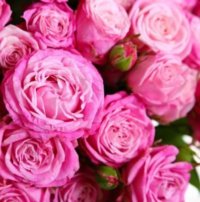 Пионовидные розы цена где купить