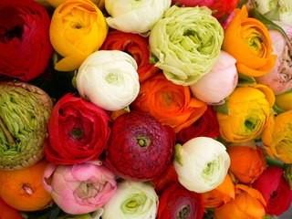 Цветы георгины в букете фото
